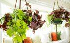 plantas colgantes para interiores