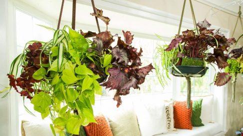 Las plantas colgantes le dan un aspecto ideal a cualquier espacio
