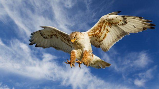 ¿Cómo son las aves rapaces diurnas y nocturnas?