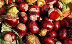 La verdad es que encontramos gran cantidad de frutos secos durante toda la temporada.