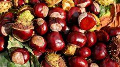 Los alimentos que debes consumir este otoño