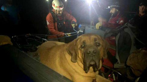 Facebook: Perro con sobrepeso es rescatado por los bomberos