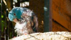 Guía de pasos para eliminar los piojos de los pájaros