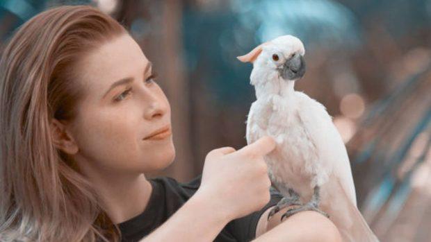 eliminar piojos de los pájaros