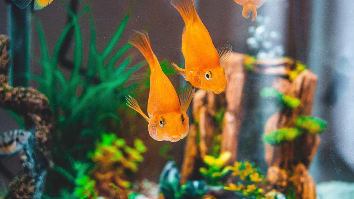 Nuevos peces en el acuario