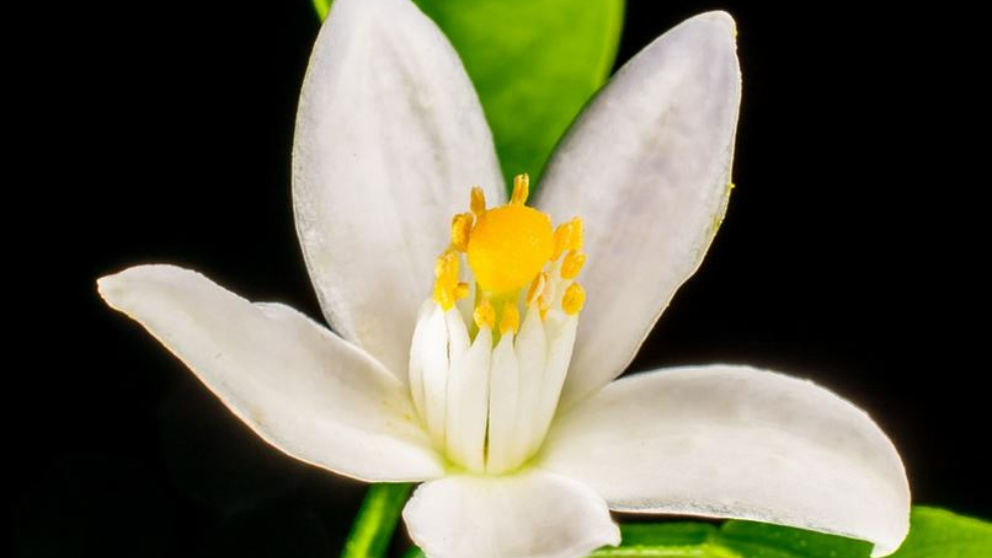 Beneficios de las flores para la salud