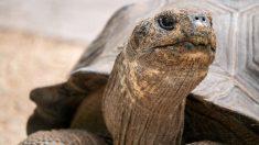 Facebook: La relajante ducha de una tortuga se vuelve viral