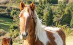 La encefalitis en el caballo