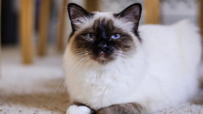 Facebook: Un gato salva a un niño de caer por las escaleras