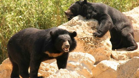 Tipos de osos en la naturaleza