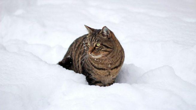 Consejos para tu gato en invierno