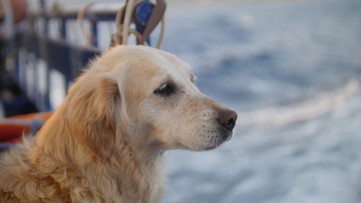 Perro en el barco