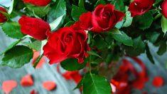 Las flores le dan mucha vida a tu hogar