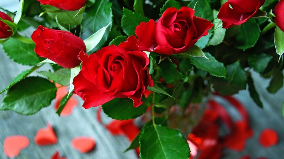 Rosas frescas.