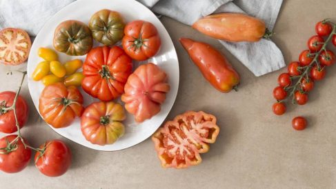 El tomate es un producto básico en nuestra alimentación