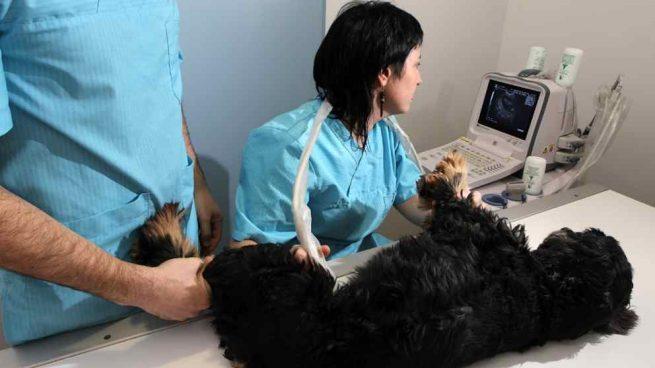 La osteopatía animal