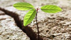 Qué es la resiliencia y cómo ser más resiliente
