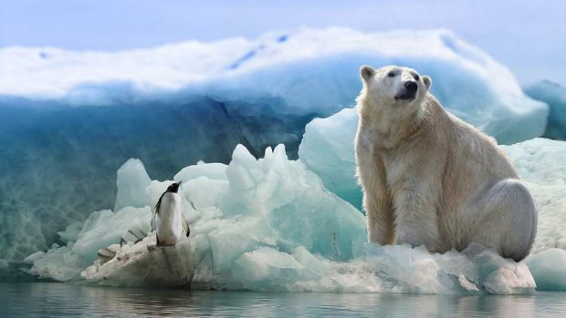 El día a día del oso polar