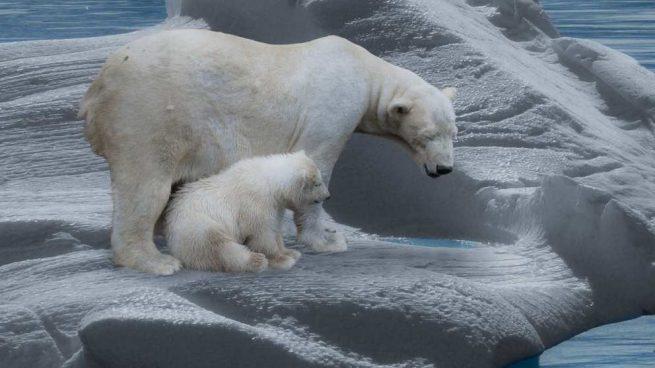 Compmortamiento del oso polar