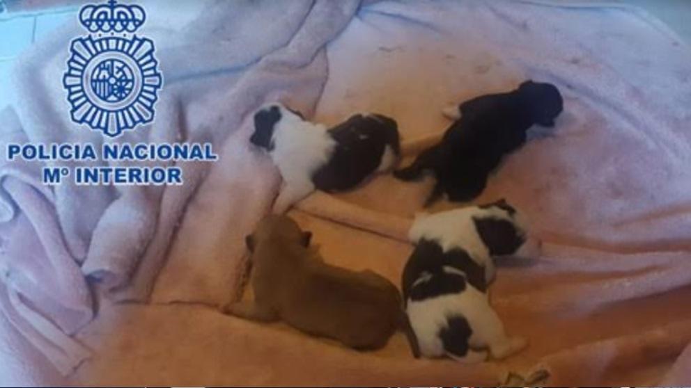 Imagen de los cuatro perros rescatados por la Policía. Foto: EP