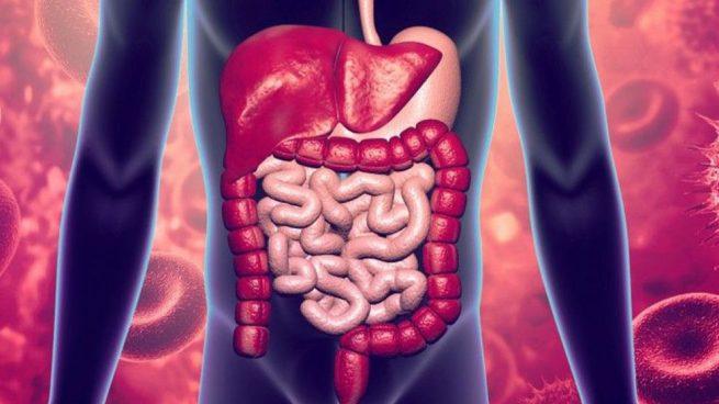 órganos del sistema digestivo