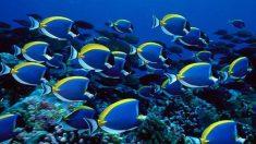 ¿Cómo se reproducen los peces? Tipos