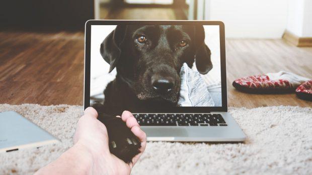 Vídeo sobre tu mascota