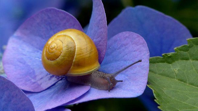 La vida del caracol