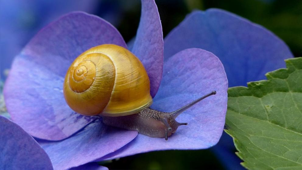 Curiosidades del caracol