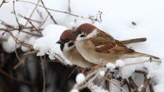 ¿Cómo cuidar tus pájaros domésticos en invierno?