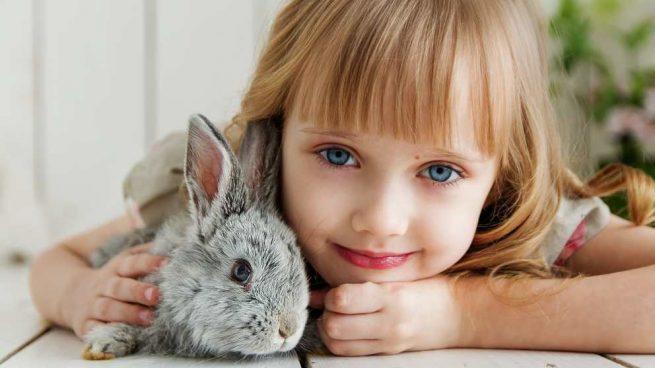 ¿Cómo tener un conejo como mascota?