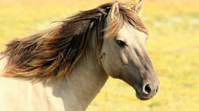 ¿Cómo es el carácter del caballo?