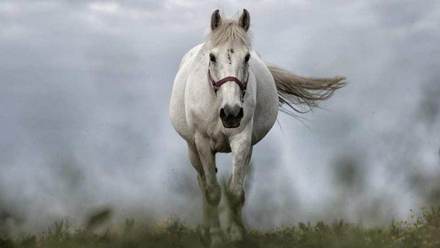 Carácter del caballo