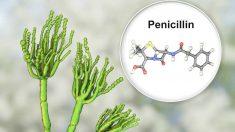 Tiposo de alergia a la penicilina