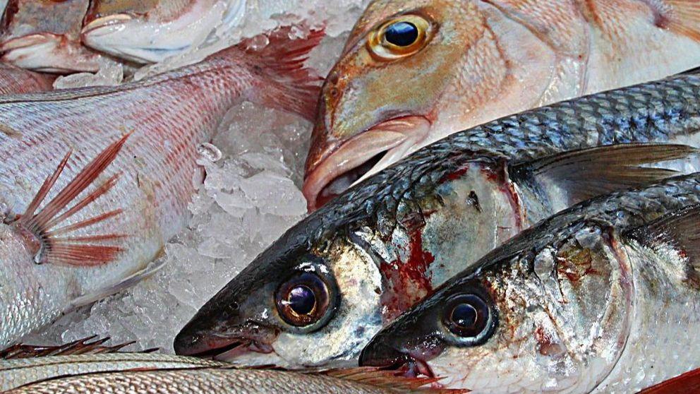 Por qué los pescados con mercurio no son buenos para la salud