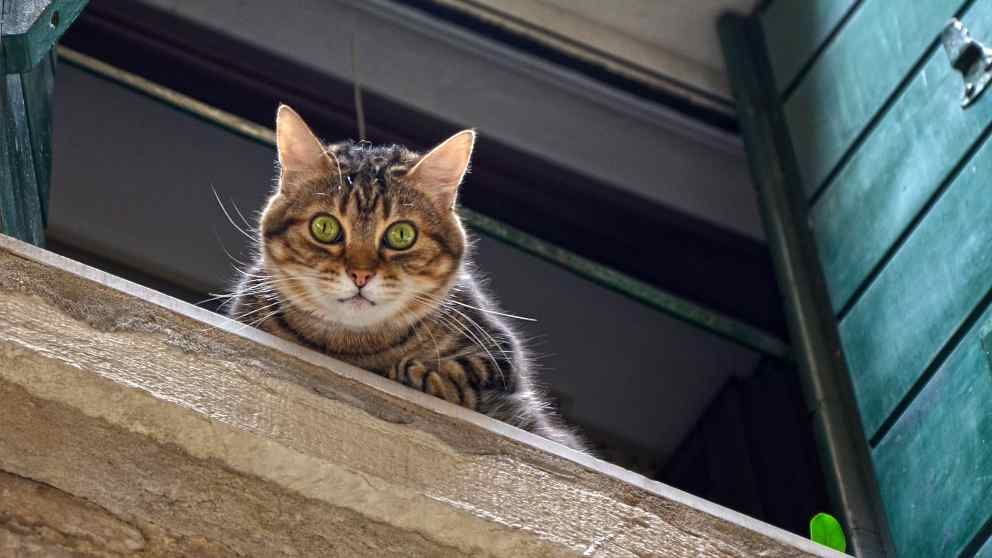 Tips para que tu gato no se escape