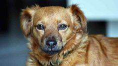 ¿Pueden perros y gatos tener sordera?