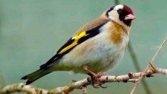 6 señales de edad avanzada en tus pájaros domésticos