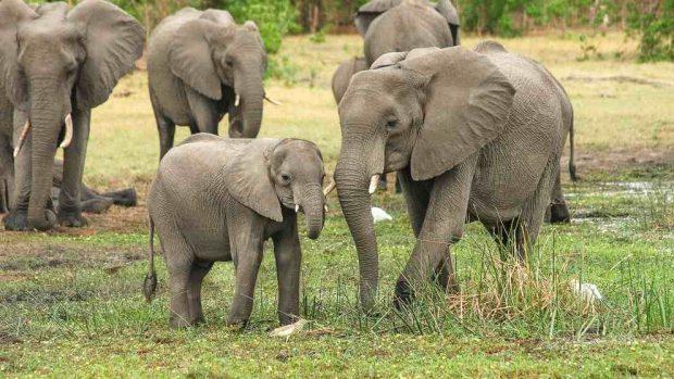 Cosas curiosas del elefante