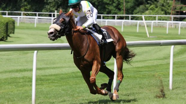 Competiciones caballos