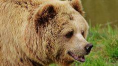 Lo que debes saber sobre los osos