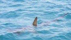 El animal marino que nada rápido