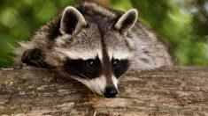 Animales más adecuados para zonas frías