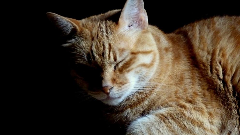 Facebook: Un bombero salva la vida de un gato intoxicado por el humo
