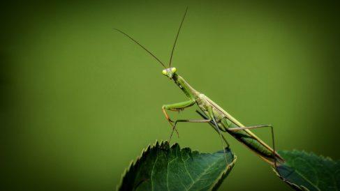 Características de los insectos más raros