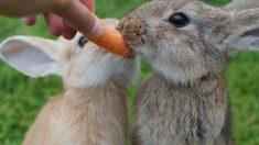 ¿Cómo cuidar a tu conejo en verano?