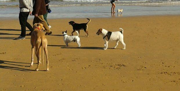 Perro suelto en la playa