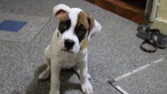 Patologías en perros, el coronavirus