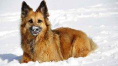 Mascotas que sufren más con el frío
