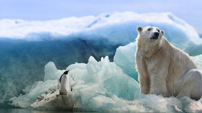 Animales frío